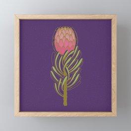 Protea Flower Framed Mini Art Print