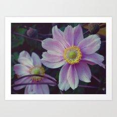 Sept. Flower  Art Print