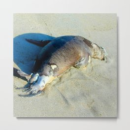 Watercolor Death 08, Monterey Bay Beach, California, Snoozing Metal Print