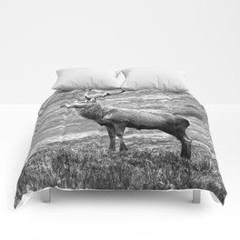 Stag b/w Comforters