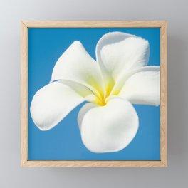 pua melia pakahikahi Framed Mini Art Print