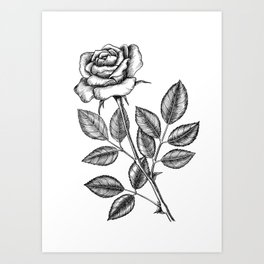 Rose drawing 2 Art Print