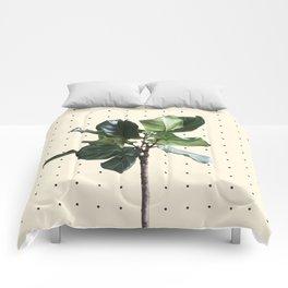 Home Ficus Comforters
