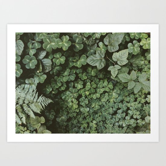 Wood Sorrel Art Print