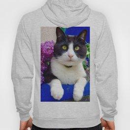 Orazio charming cat in the blue Hoody