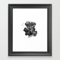 Black Geranium in White Framed Art Print
