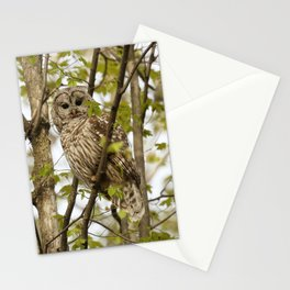 Watchful mom barred owl Stationery Cards