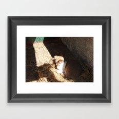 Barn Kitten Framed Art Print