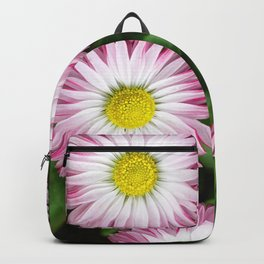 Beautiful Spring Daisies Shining in the Meadow Backpack