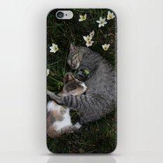 Sleep [A CAT AND A KITTEN] iPhone & iPod Skin