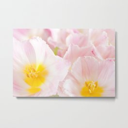 Light pink tulip macro inside Metal Print