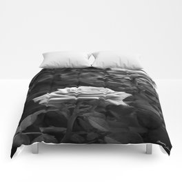 Pink Roses in Anzures 5 B&W Comforters