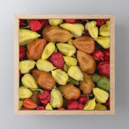Hot Peppers Framed Mini Art Print