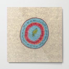 Growing - Hoya - embroidery based on plant cell under the microscope Metal Print