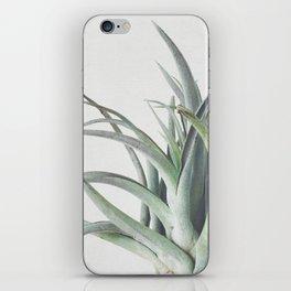 Air Plant II iPhone Skin