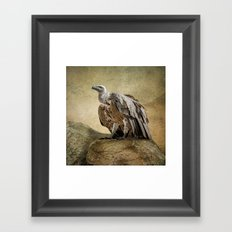 Griffon Vulture Framed Art Print
