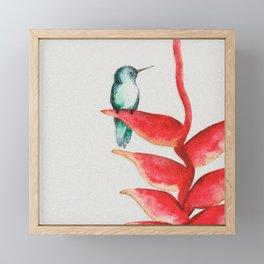 Tropical Hummingbird Framed Mini Art Print