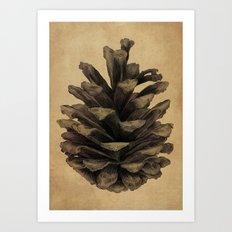 Pine Cone Art Print