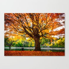 Many colors of fall Canvas Print