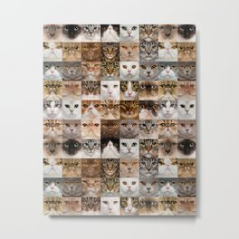 Various Breed of Kitten Faces Collage Metal Print