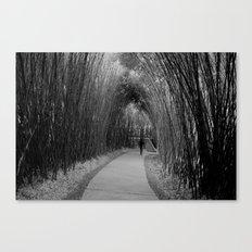bamboo path  Canvas Print