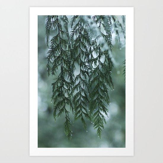 Nature's Drapery Art Print