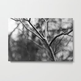 black and white branches Metal Print