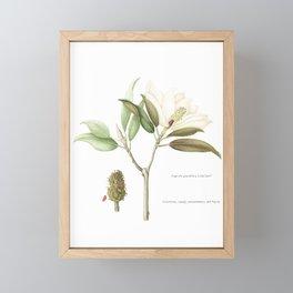"""Flowering """"Little Gem"""" Magnolia Tree Framed Mini Art Print"""