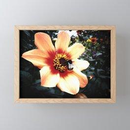 Translucent Wings Framed Mini Art Print