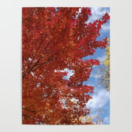 Garnet and Gold Glory - Autumn Sugar Maples Poster