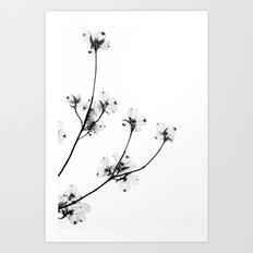 Dogwood Flowers in Black and White Art Print