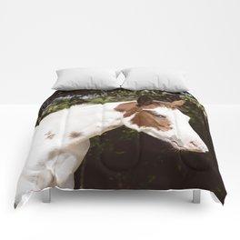 Quiet Splash Comforters