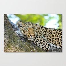A Leopards Gaze 2 Canvas Print