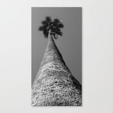 Blurry Palm Canvas Print