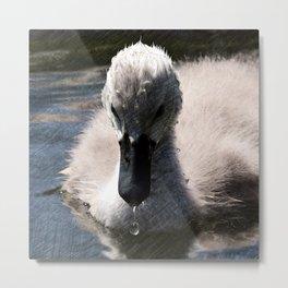Impressive animal - Baby Swan Metal Print