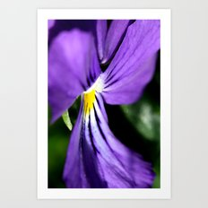 pansy close-up  Art Print