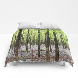 Teak Forest in Guanacaste, Costa Rica Comforters