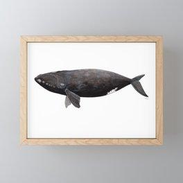 Northern right whale (Eubalaena glacialis) Framed Mini Art Print