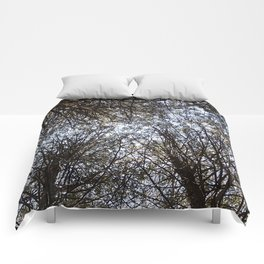 Branches Above Comforters