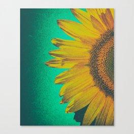 Sunflower vintage Canvas Print