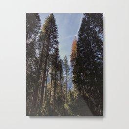 Yosemite Forest Metal Print