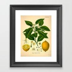 Botanical Print: Lemon Tree Framed Art Print