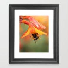 Bee on Flower. Framed Art Print