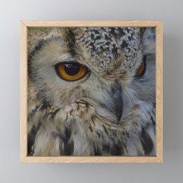 Eurasian eagle-owl, wild bird Framed Mini Art Print