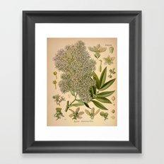 Botanical Print: Hydrangea Framed Art Print