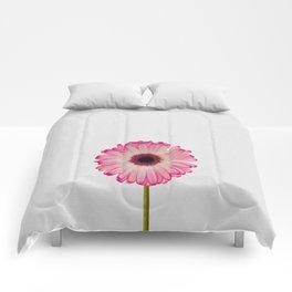 Daisy Still Life Comforters