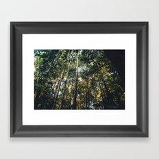 Bornean Jungle Framed Art Print
