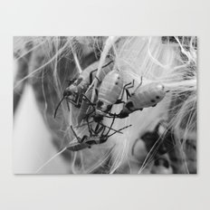 bugs on a seedpod Canvas Print