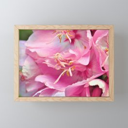 Pink Symphony Floral  of Hope by Reay of Light Photography Framed Mini Art Print
