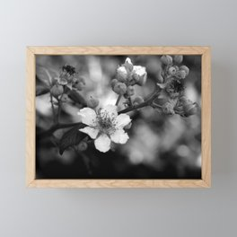 Blackberry Flower Framed Mini Art Print